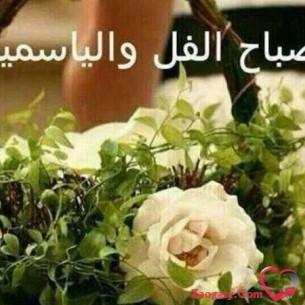 Ibrahim81
